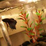 Miniakwarium z rybkami i długopisami